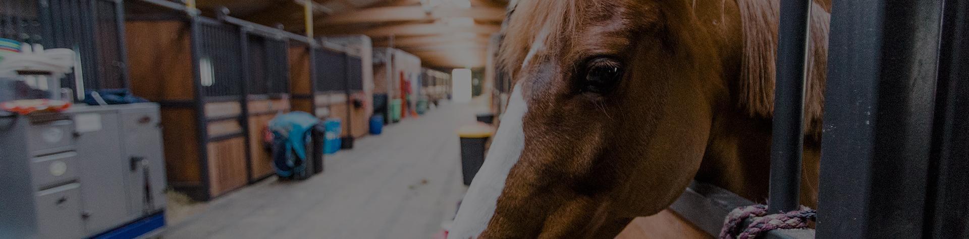 Salio Klub Jeździecki